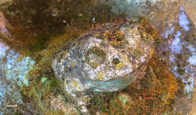 Photography-Yard Art-Frog-Moss-SwittersB