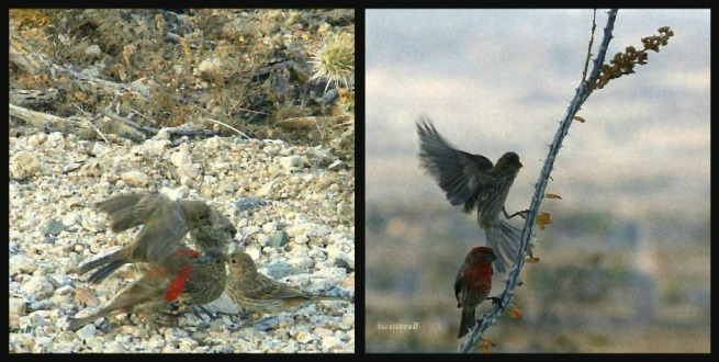 photography-birds-desert-feeding-Joshua