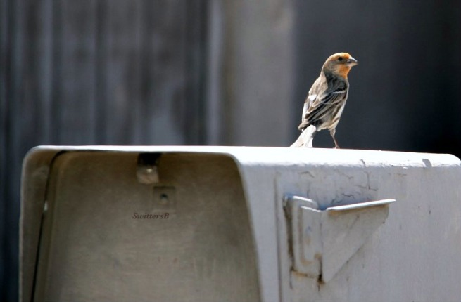 photography-birds-mailbox-airmail-SwittersB