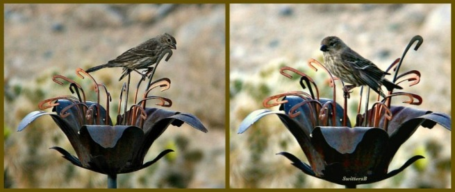 photography-birds-mojave desert-SwittersB