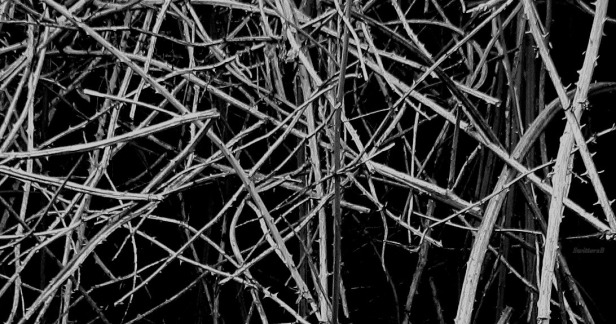 photography-briars-thicket-thorns-SwittersB