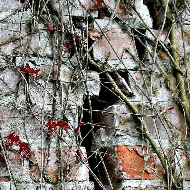 Photography-Brick-Cracked-Vines-SwittersB