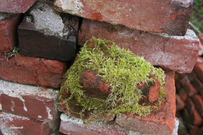 Photography-Brick-Moss-SwittersB
