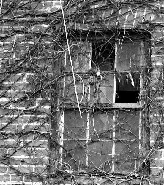 photography-brick-vines-broken window-old building-SwittersB
