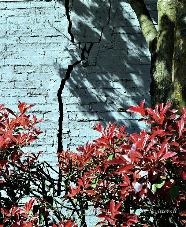 photography-cracked wall-Portland-SwittersB