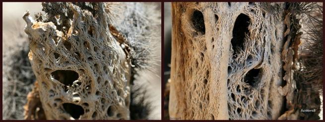 photography-dead cactus-mojave desert-swittersb