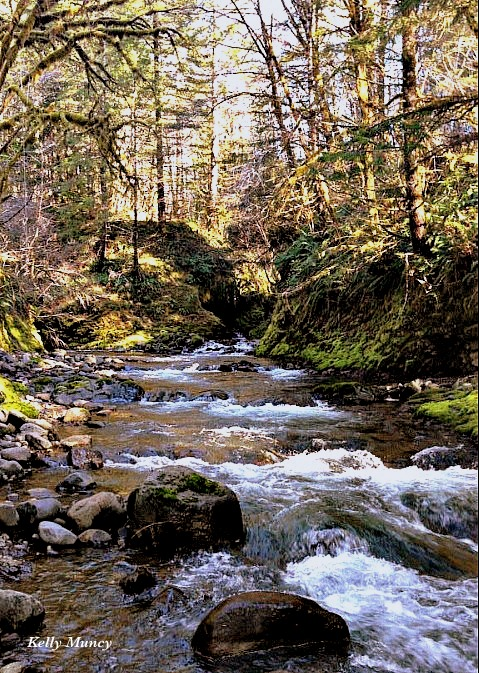 Photography-Jordan Creek-Oregon-KMuncy-SwittersB