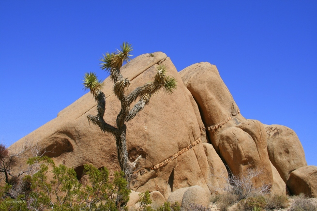 Photography-Joshua Tree-Mojave Desert--SwittersB