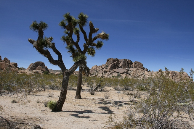 Photography-Joshua Tree-Rocks-Mojave-SwittersB
