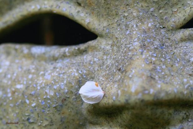 photography-macro-blossom-yard art-SwittersB