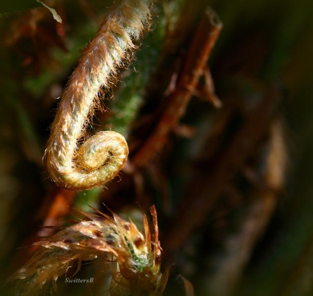 photography-macro-ferns-SwittersB