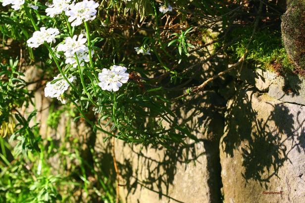 Photography-Macro-Landscape-Stone-SwittersB