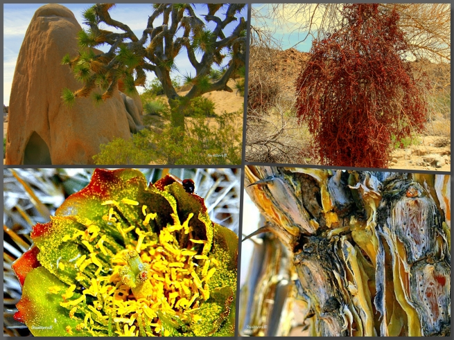 photography-mojave desert collage-SwittersB