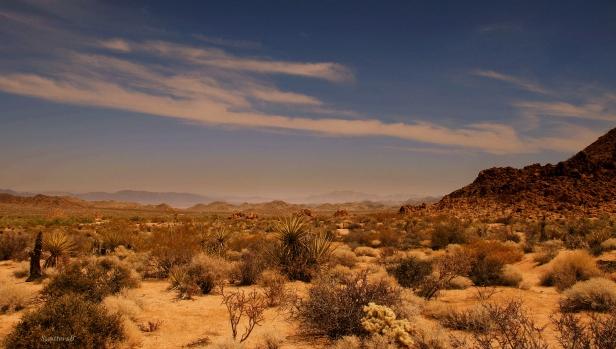 photography-Mojave Desert-Desert-SwittersB