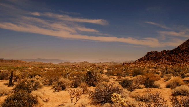 photography-Mojave Desert-Desert-SwittersB