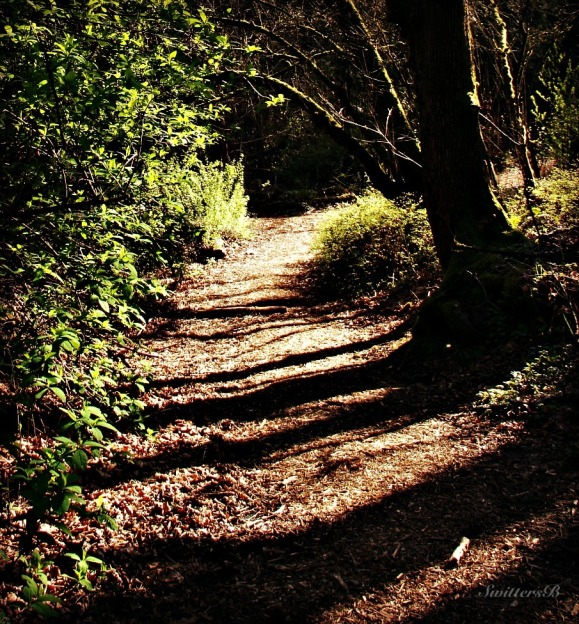 photography-nature-late afternoon-shadows-SwittersB