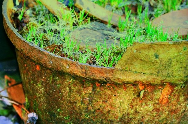 photography-old clay pot-gardens-SwittersB