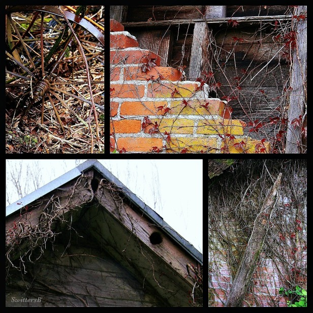 Photography-old farm-vines-brick-old boards-birds-SwittersB
