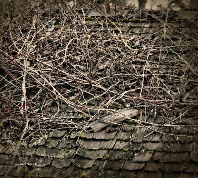 photography-old roof-briars-moss-vintage-SwittersB