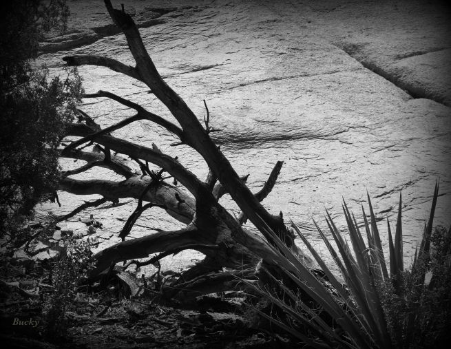 photography-old snag-black and white-desert-mojave-SwittersB