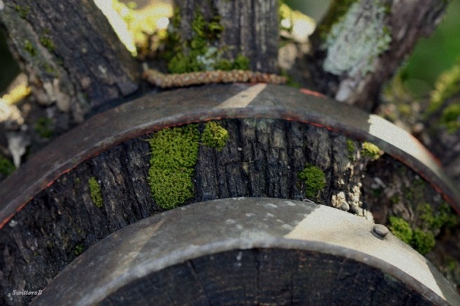 photography-old wheel-macro-moss-SwittersB