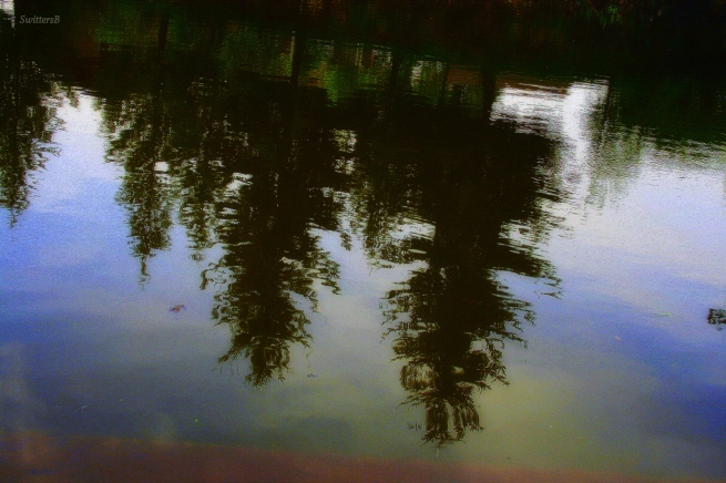 photography-reflection-upside down-trees-water-SwittersB