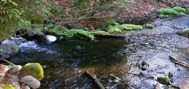 photography-stream-water-brook-creek-SwittersB