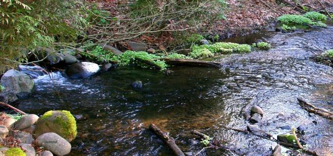 photography-stream-water-brook-creek-SwittersB