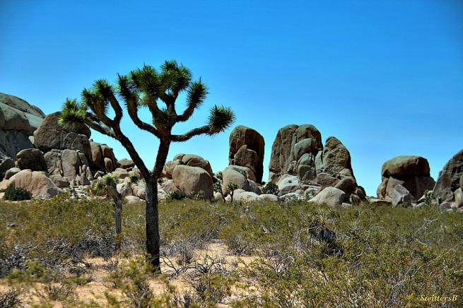 photography-SwittersB-Joshua Tree-rocks-Mojave Desert