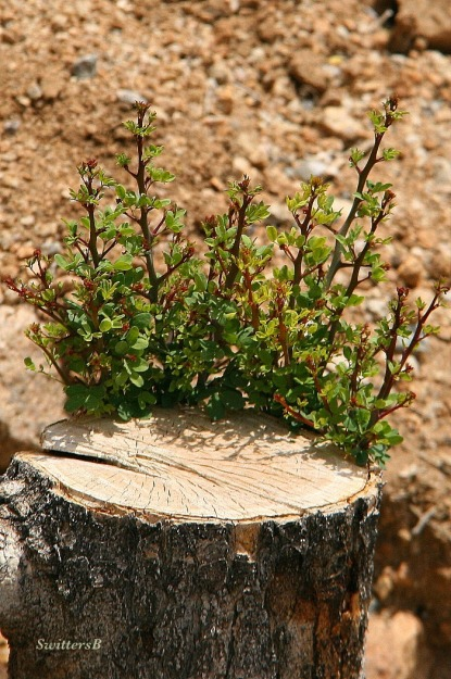 photography--tree-new growth-nature-SwittersB