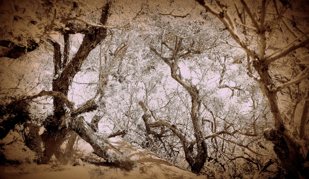 photography--woods-tahquitz canyon-SwittersB