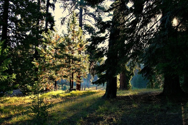 camping-morning light-photography-woods-SwittersB