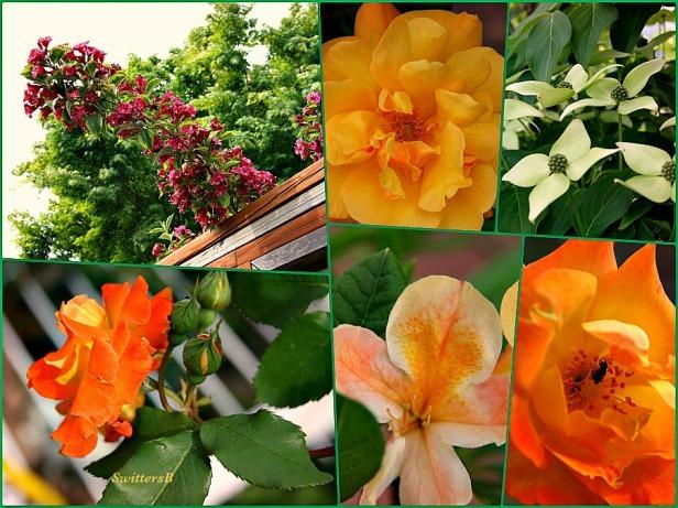 photography-gardening-flowers-macro-photography-SwittersB