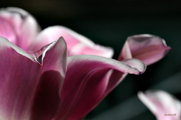 photography-macro-flowers1-SwittersB