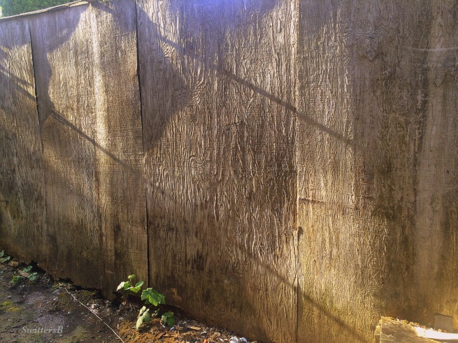 photography-old fence-wood grain-SwittersB