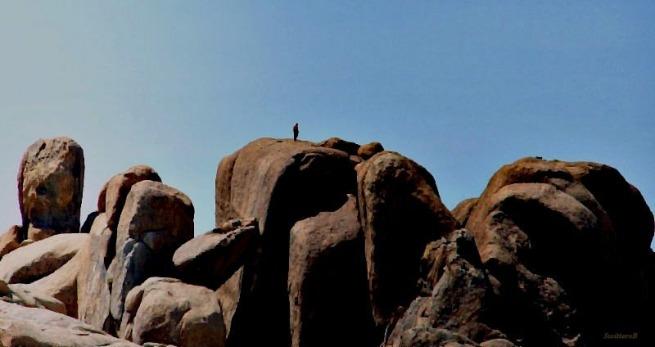 photography-rock climbing-Joshua Tree-Scale-SwittersB