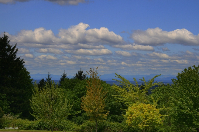 photography-SwittersB-clouds-green trees