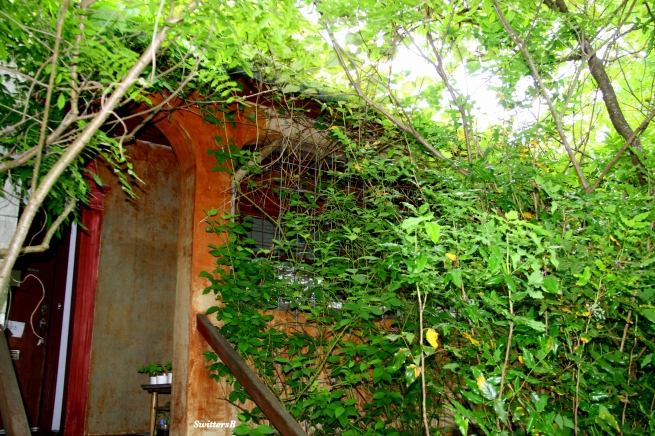 Photography-SwittersB-Cottage-Vines