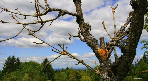 photography-SwittersB-dead tree-nature