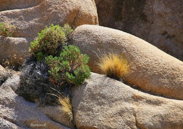 photography-SwittersB-Joshua Tree-Rock formations