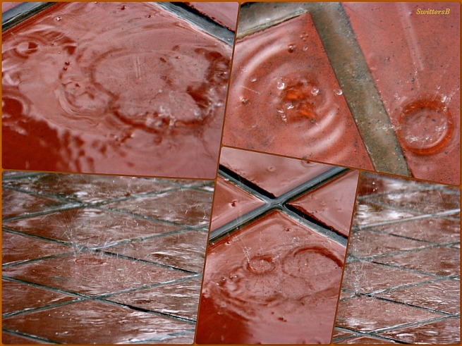 photography-SwittersB- raindrop collage-red tile