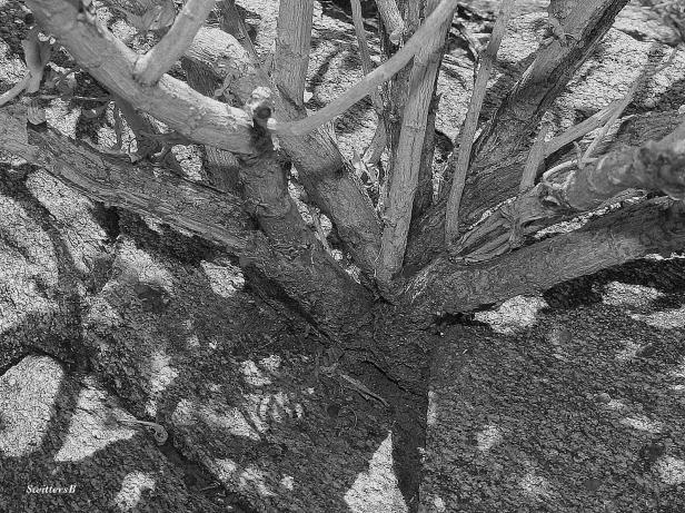 photography-SwittersB-tree-crack rock-