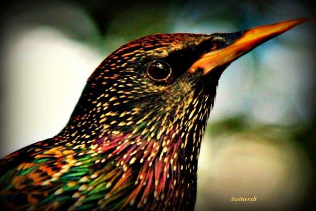 photography-telephoto-bird-birding-nature-SwittersB