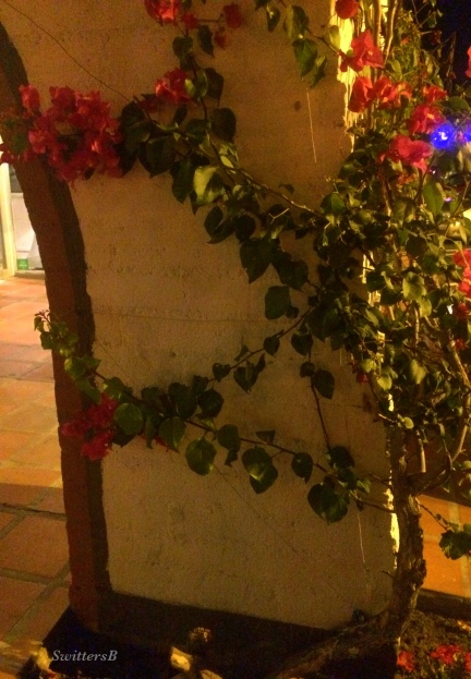 photography-vines-SwittersB-flowers-surrounded