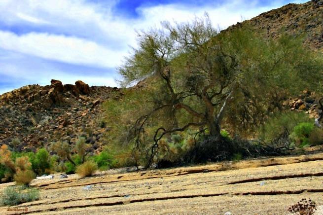 photography-wash-SwittersB-Mojave Desert