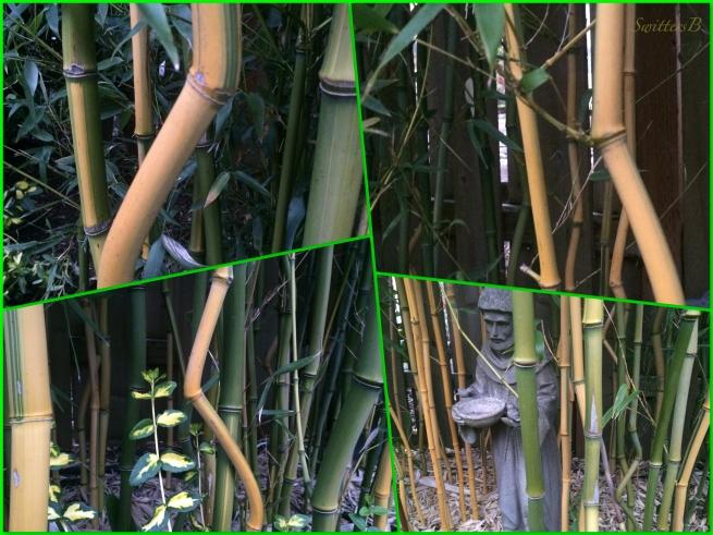 bambb-garden-health-photography-SwittersB