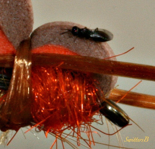 bug-fly tying-macro-photography-SwittersB