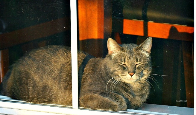 Cat-Cats-Tabby-Penny the Cat-Sunset-Photography-Pets-SwittersB