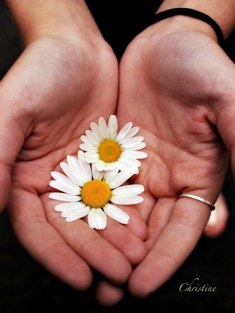 Christine-Perfectamity-Flowers-Hands