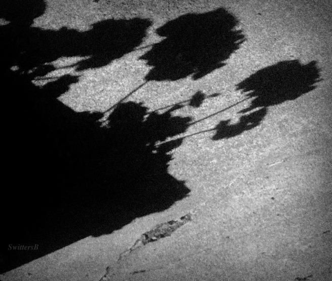 flowers-garden-shadows-sunlight-photography-SwittersB